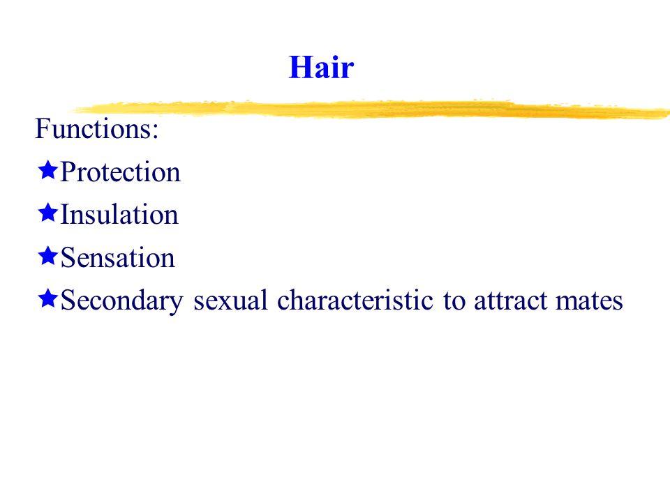 Hair Cont.