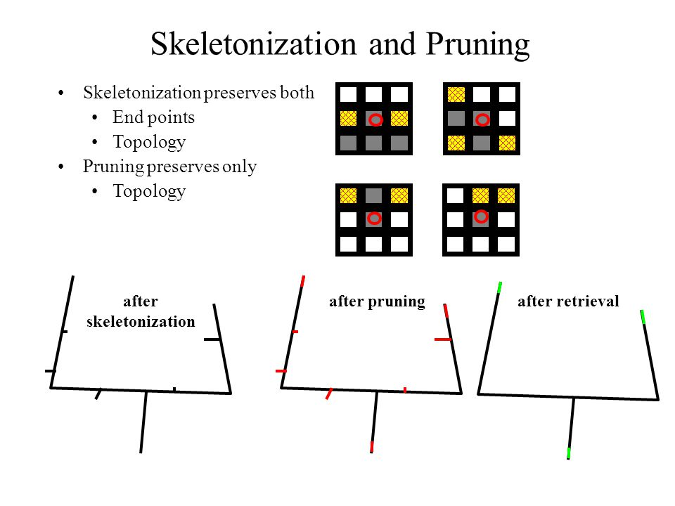 Skeletonization and Pruning Skeletonization preserves both End points Topology Pruning preserves only Topology after skeletonization after pruningafter retrieval