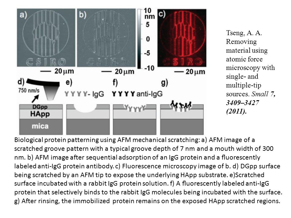 Biological protein patterning using AFM mechanical scratching: a) AFM image of a scratched groove pattern with a typical groove depth of 7 nm and a mouth width of 300 nm.
