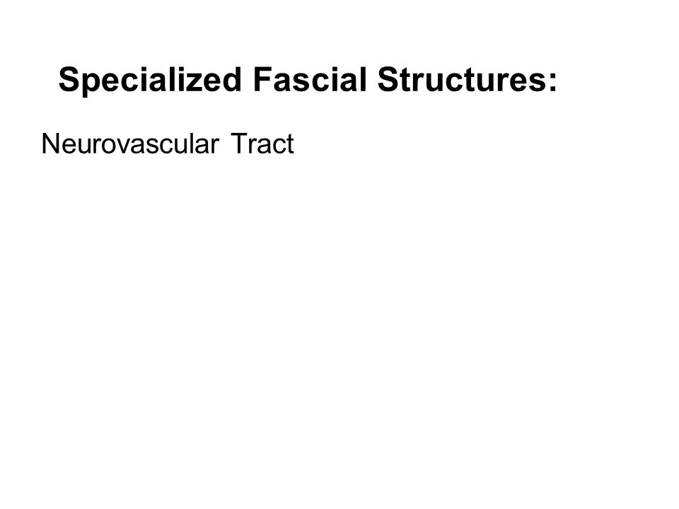 Specialized Fascial Structures: Neurovascular Tract