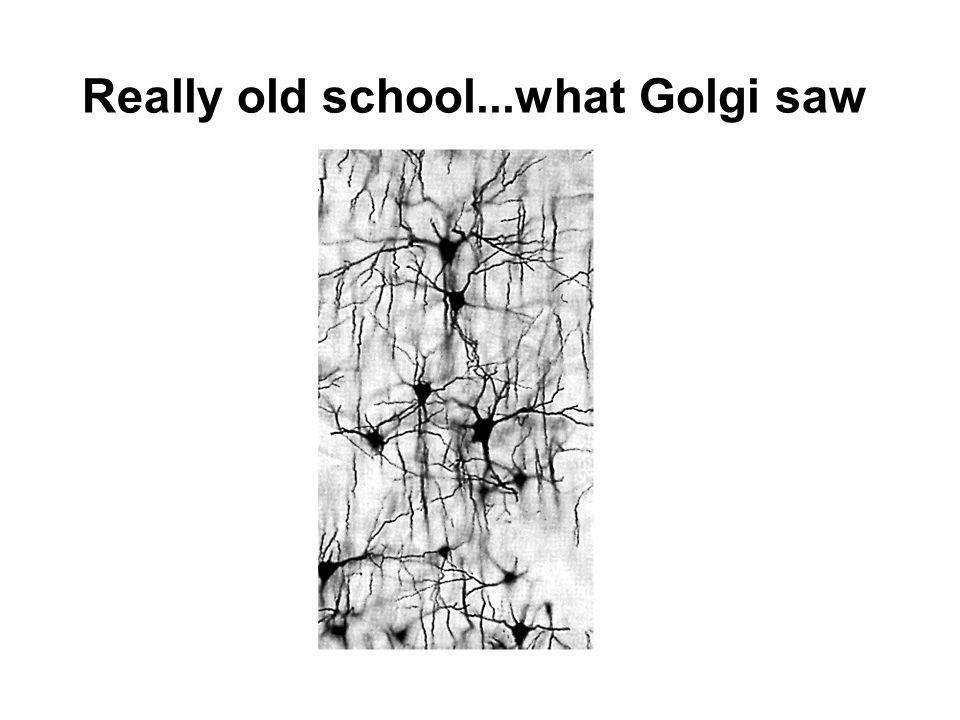 Really old school...what Golgi saw