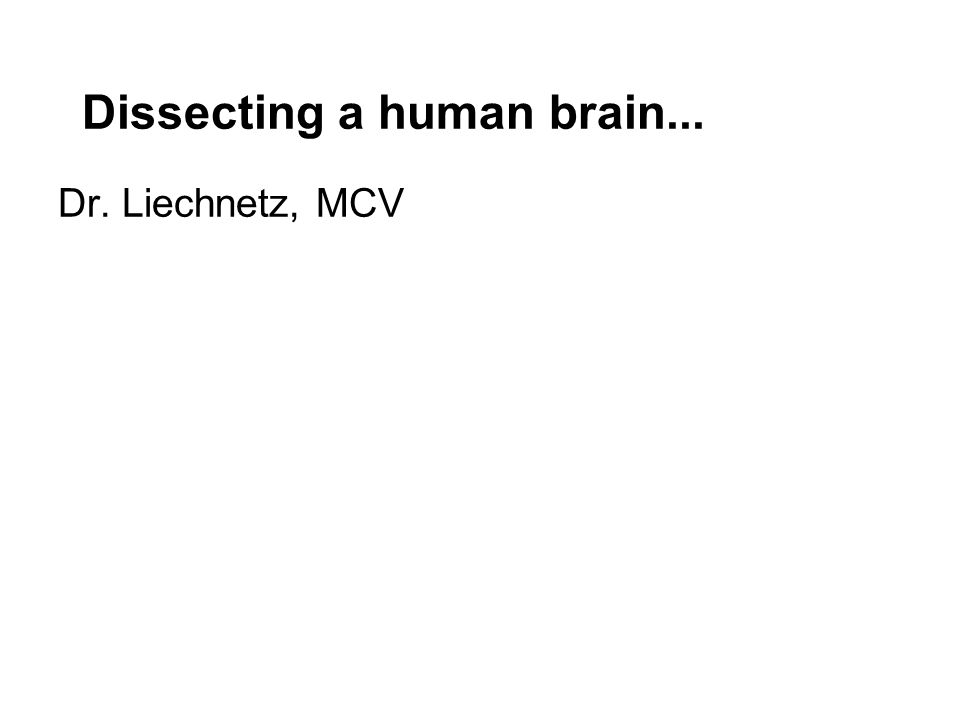 Dissecting a human brain... Dr. Liechnetz, MCV