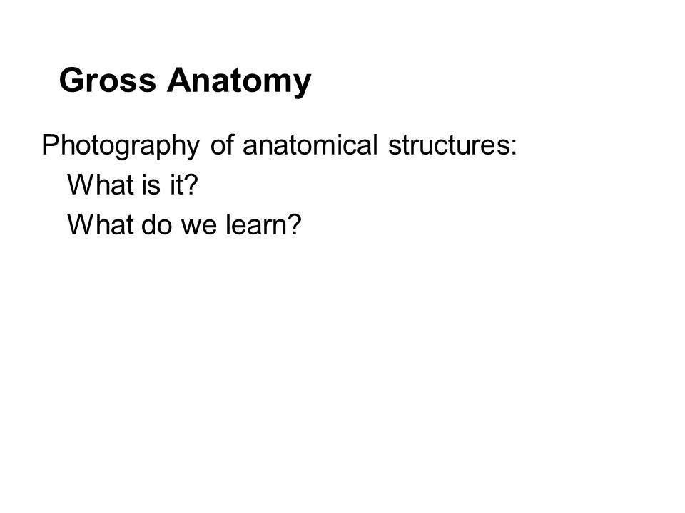 Gross Anatomy Photography of anatomical structures: What is it What do we learn