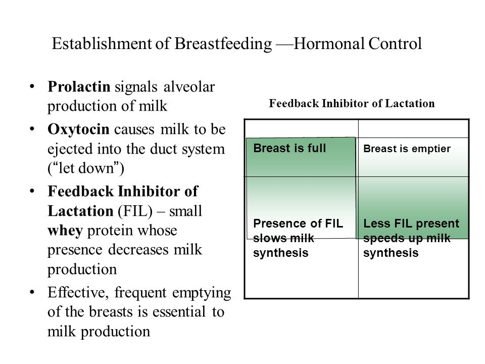 Establishment of Breastfeeding —Hormonal Control Prolactin signals alveolar production of milk Oxytocin causes milk to be ejected into the duct system ( let down ) Feedback Inhibitor of Lactation (FIL) – small whey protein whose presence decreases milk production Effective, frequent emptying of the breasts is essential to milk production Breast is full Breast is emptier Presence of FIL slows milk synthesis Less FIL present speeds up milk synthesis Feedback Inhibitor of Lactation