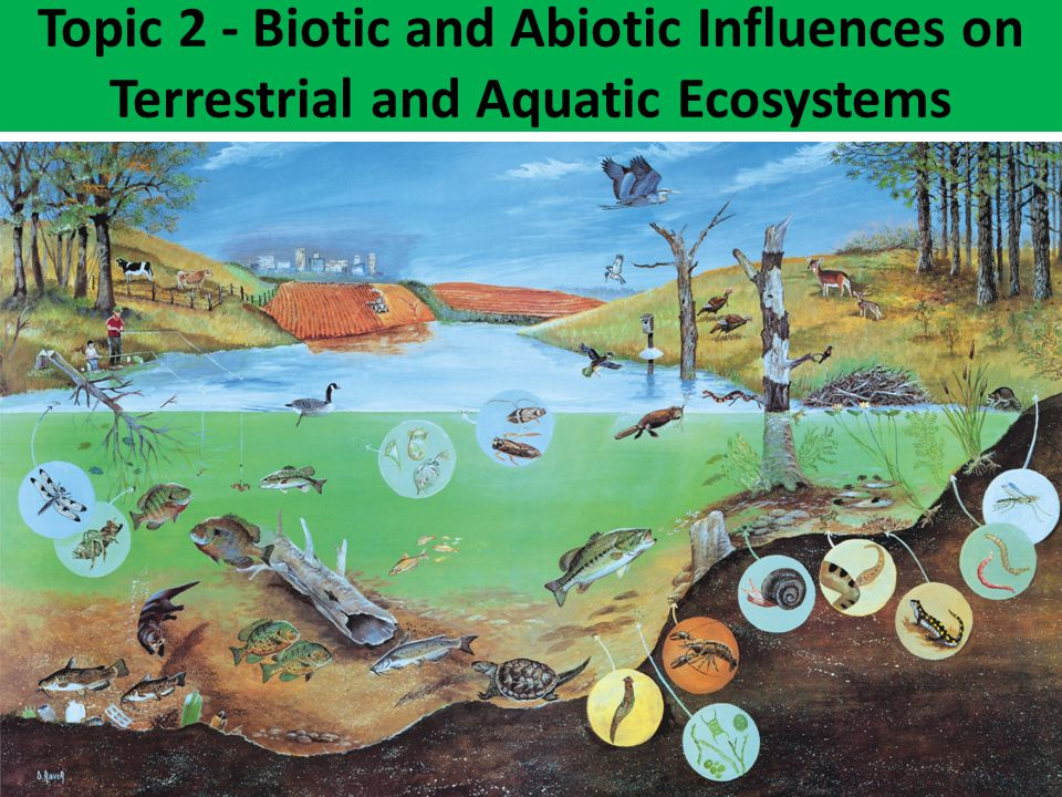 Topic 2 - Biotic and Abiotic Influences on Terrestrial and Aquatic Ecosystems