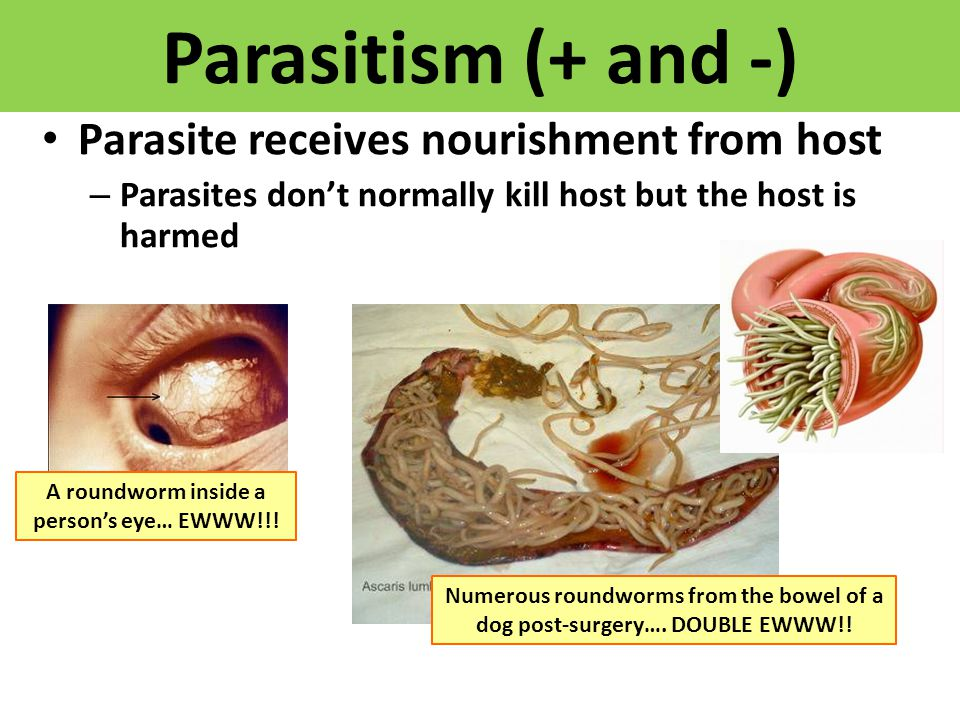 Parasitism (+ and -) Parasite receives nourishment from host – Parasites don't normally kill host but the host is harmed A roundworm inside a person's eye… EWWW!!.