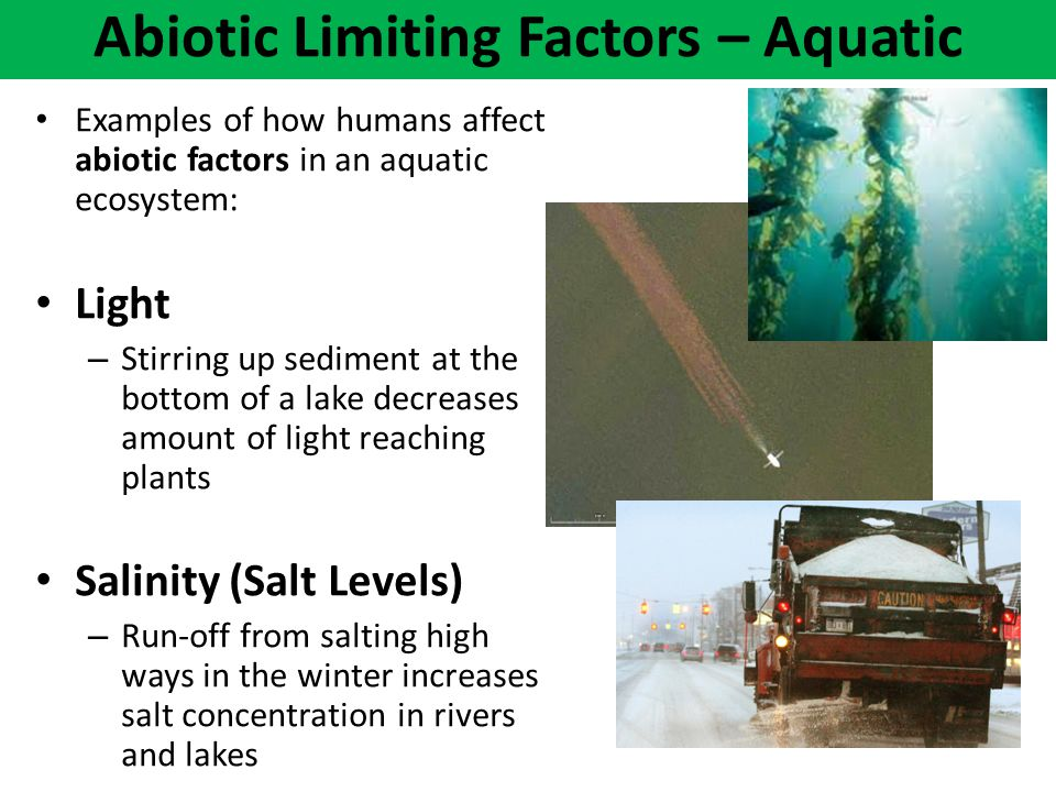 Examples of how humans affect abiotic factors in an aquatic ecosystem: Light – Stirring up sediment at the bottom of a lake decreases amount of light
