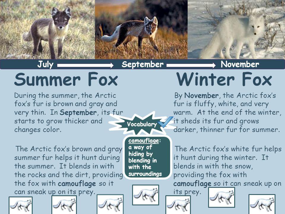 Brrrrr!!!.The Arctic fox must survive frigid temperatures during the winter.
