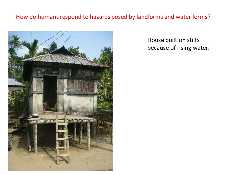 House built on stilts because of rising water. How do humans respond to hazards posed by landforms and water forms?