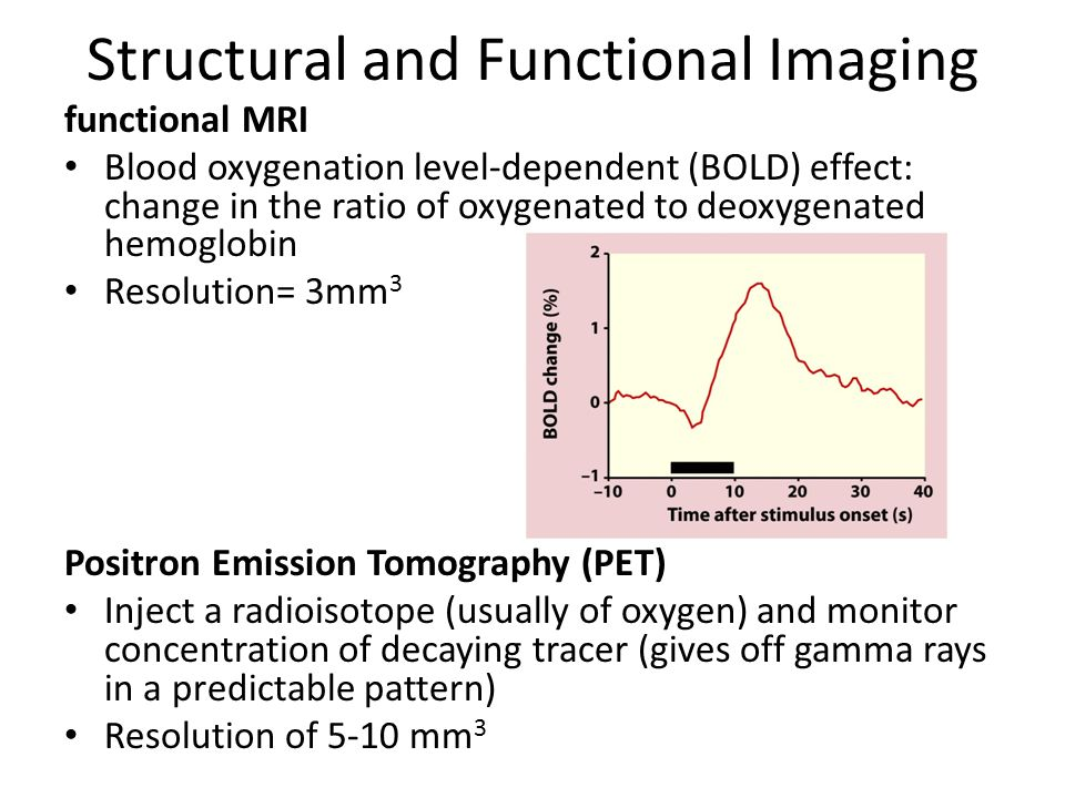 Structural and Functional Imaging functional MRI Blood oxygenation level-dependent (BOLD) effect: change in the ratio of oxygenated to deoxygenated hemoglobin Resolution= 3mm 3 Positron Emission Tomography (PET) Inject a radioisotope (usually of oxygen) and monitor concentration of decaying tracer (gives off gamma rays in a predictable pattern) Resolution of 5-10 mm 3
