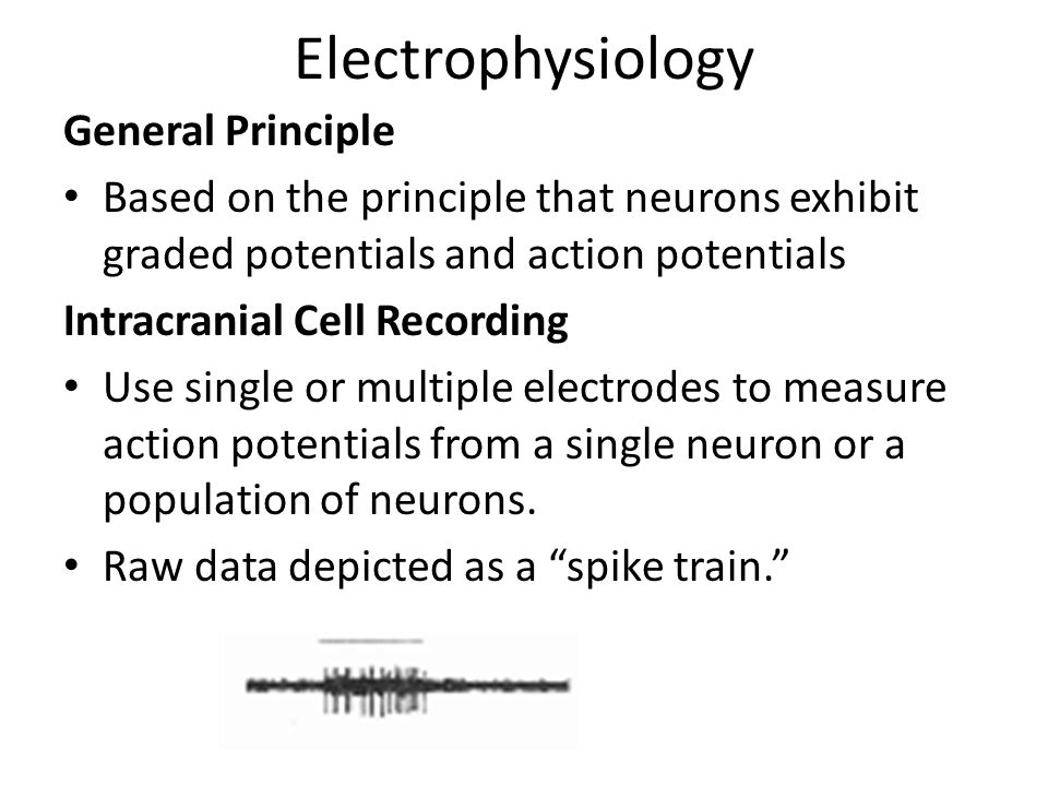 Electrophysiology General Principle Based on the principle that neurons exhibit graded potentials and action potentials Intracranial Cell Recording Use single or multiple electrodes to measure action potentials from a single neuron or a population of neurons.