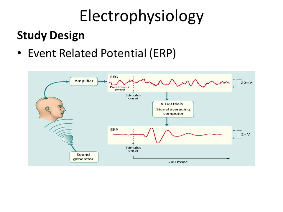 Electrophysiology Study Design Event Related Potential (ERP)