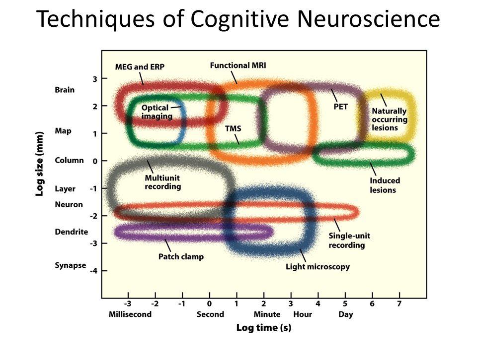 Techniques of Cognitive Neuroscience