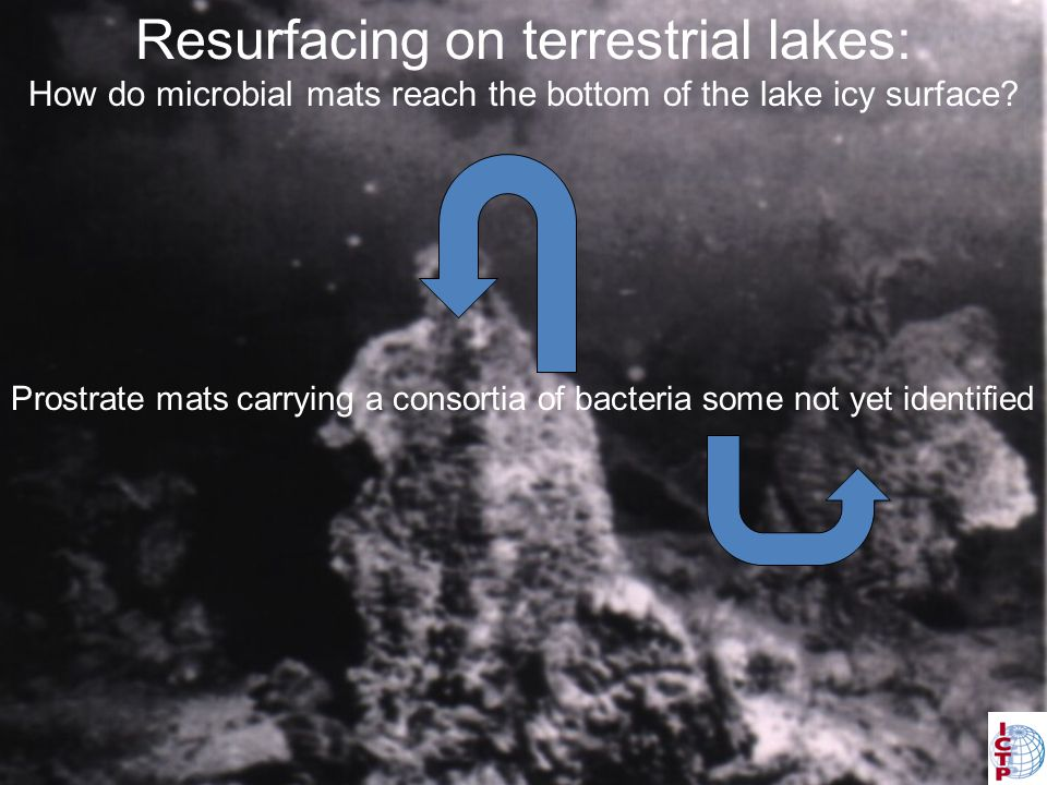 Resurfacing on terrestrial lakes: How do microbes reach from the bottom to the top of the lake icy surface.