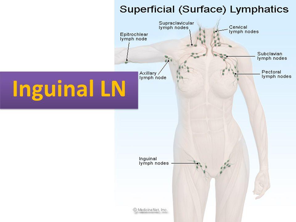 Inguinal LN
