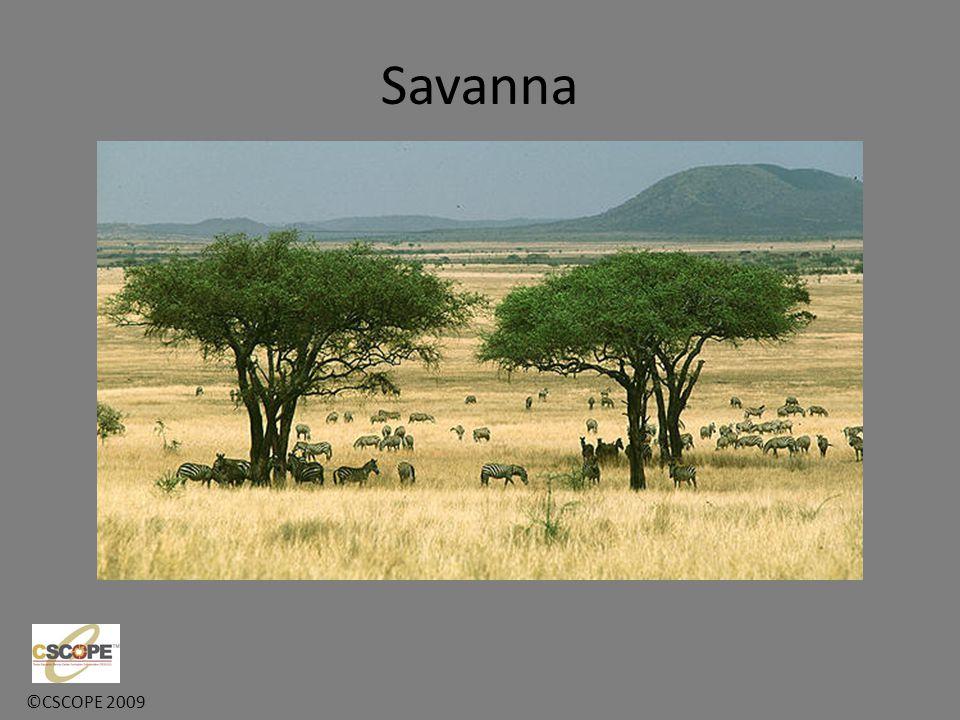 ©CSCOPE 2009 Savanna