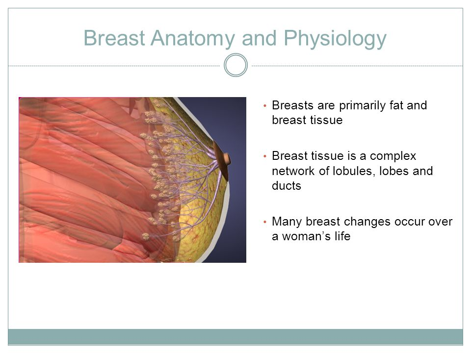 Breast Anatomy and Physiology Breasts are primarily fat and breast tissue Breast tissue is a complex network of lobules, lobes and ducts Many breast changes occur over a woman's life
