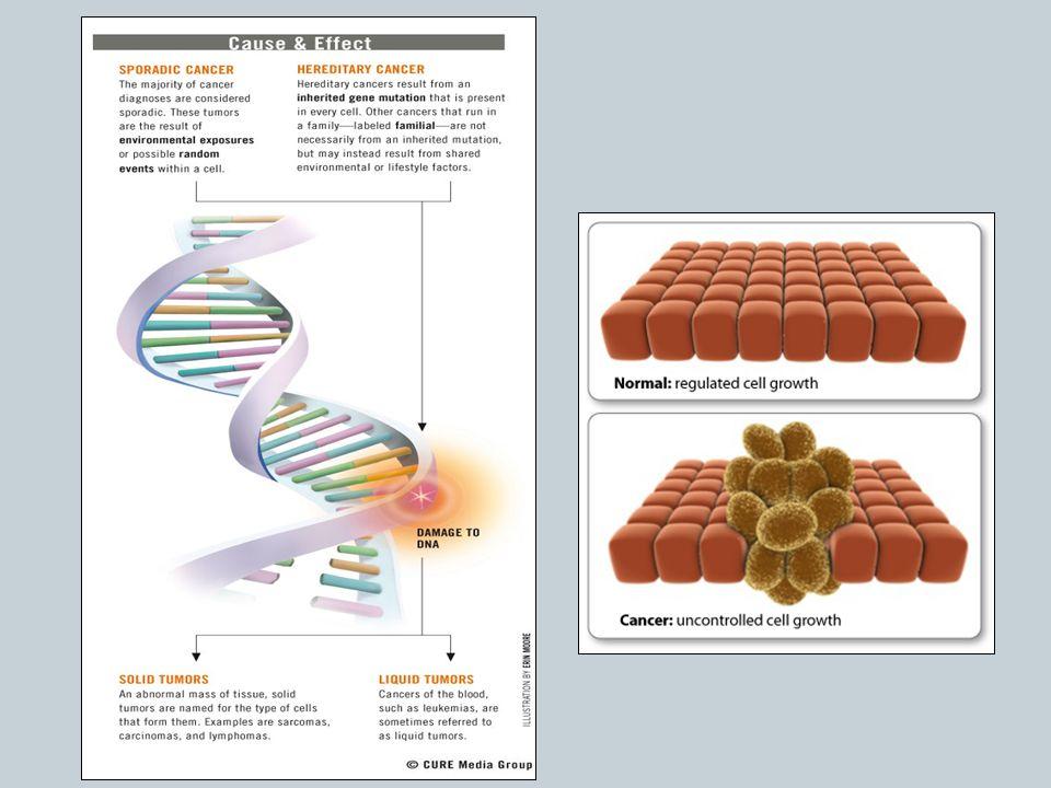 Types of Cancer Carcinomas  The most common type of cancer Sarcomas Lymphomas Leukemias