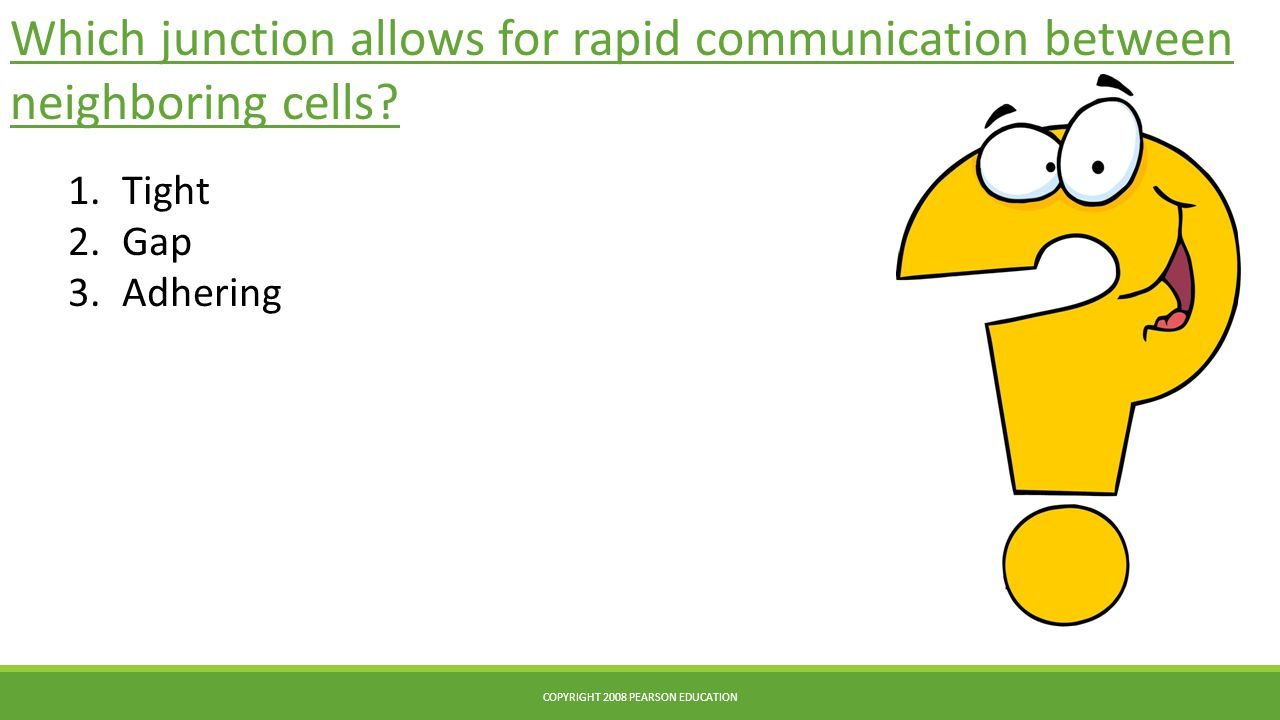 Which junction allows for rapid communication between neighboring cells.