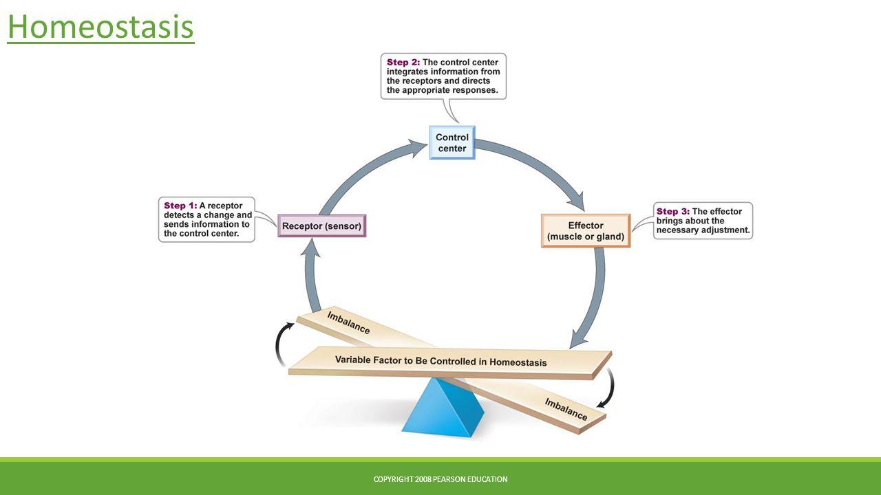 Homeostasis COPYRIGHT 2008 PEARSON EDUCATION