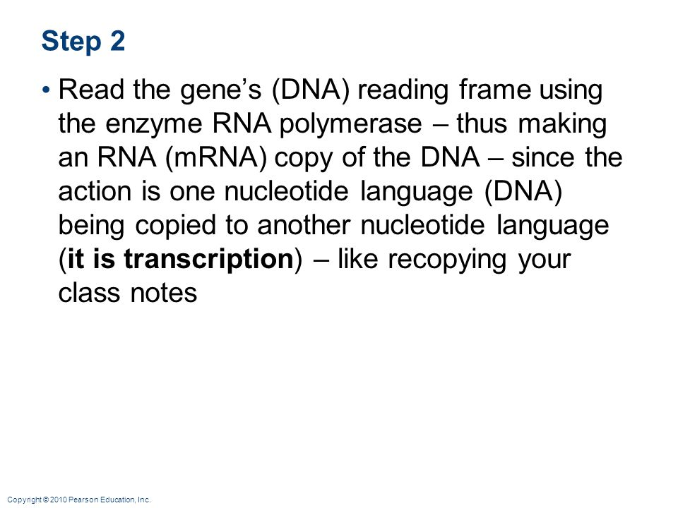 Copyright © 2010 Pearson Education, Inc. Step 2 Read the gene's (DNA) reading frame using the enzyme RNA polymerase – thus making an RNA (mRNA) copy o