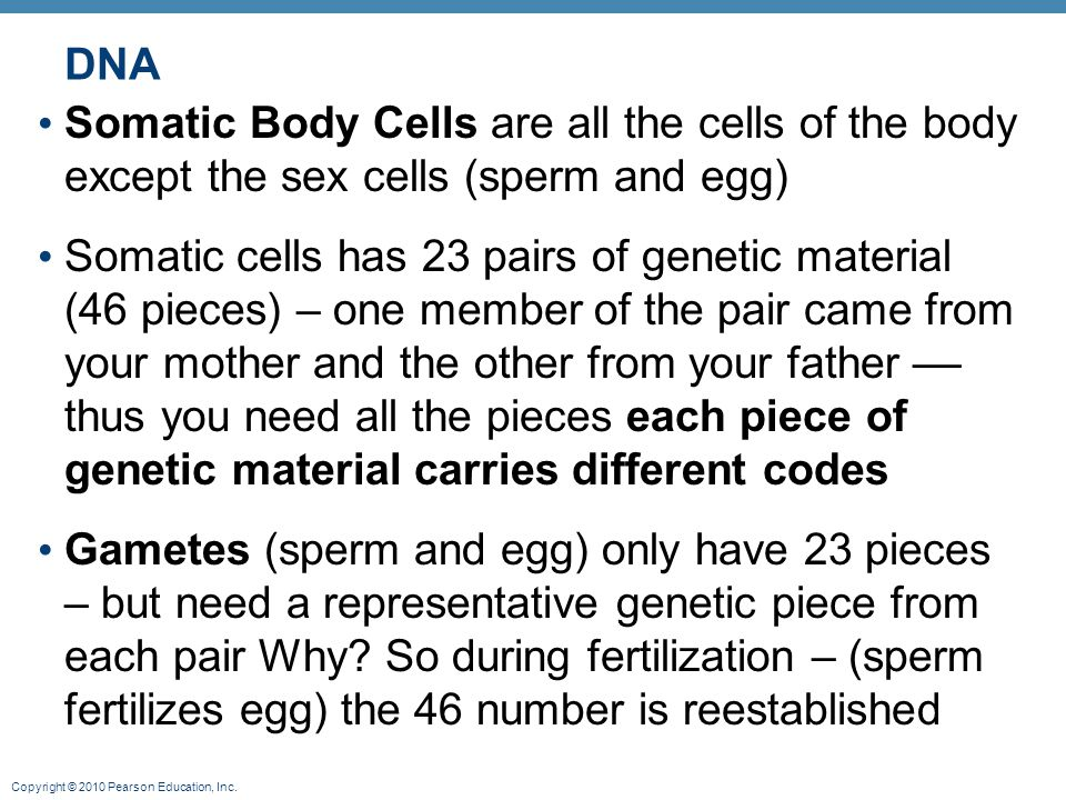 Copyright © 2010 Pearson Education, Inc. DNA Somatic Body Cells are all the cells of the body except the sex cells (sperm and egg) Somatic cells has 2