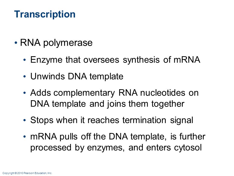 Copyright © 2010 Pearson Education, Inc. Transcription RNA polymerase Enzyme that oversees synthesis of mRNA Unwinds DNA template Adds complementary R