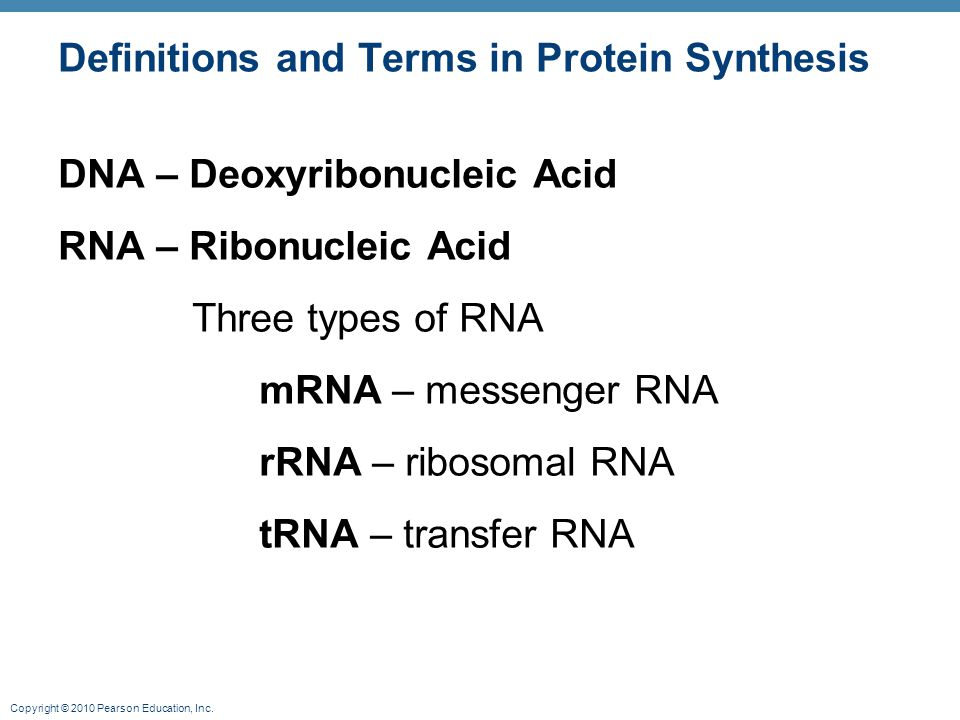 Copyright © 2010 Pearson Education, Inc. Definitions and Terms in Protein Synthesis DNA – Deoxyribonucleic Acid RNA – Ribonucleic Acid Three types of