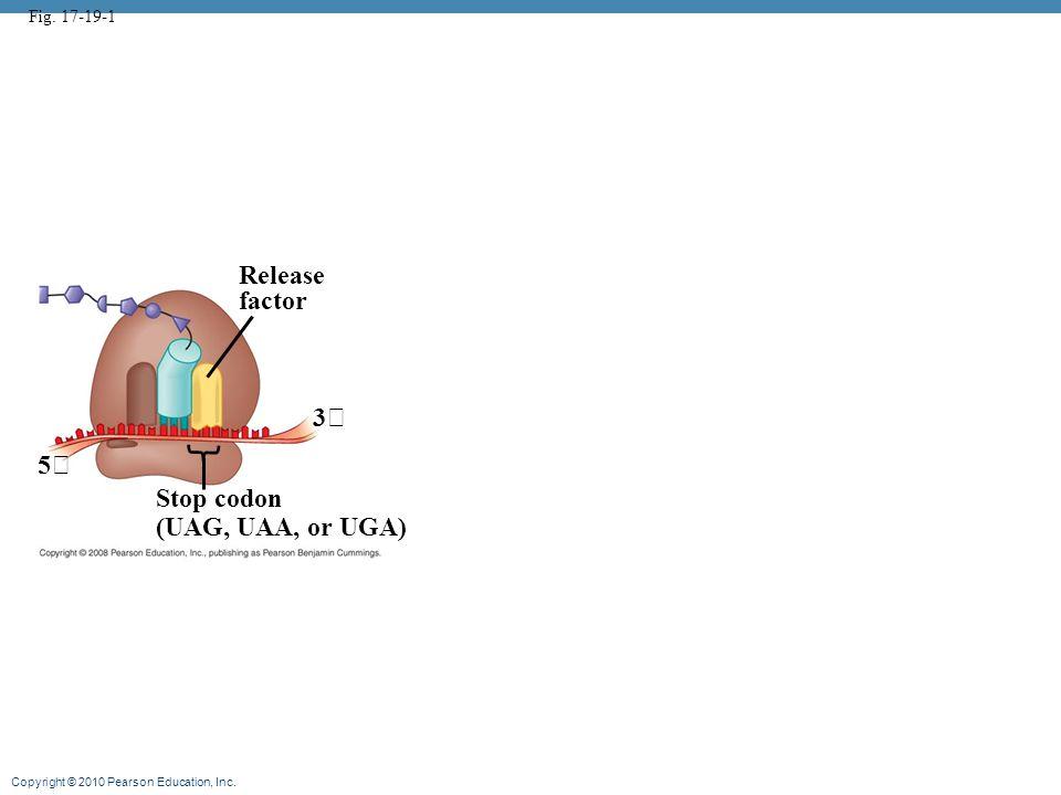 Copyright © 2010 Pearson Education, Inc. Fig. 17-19-1 Release factor 3 5 Stop codon (UAG, UAA, or UGA)