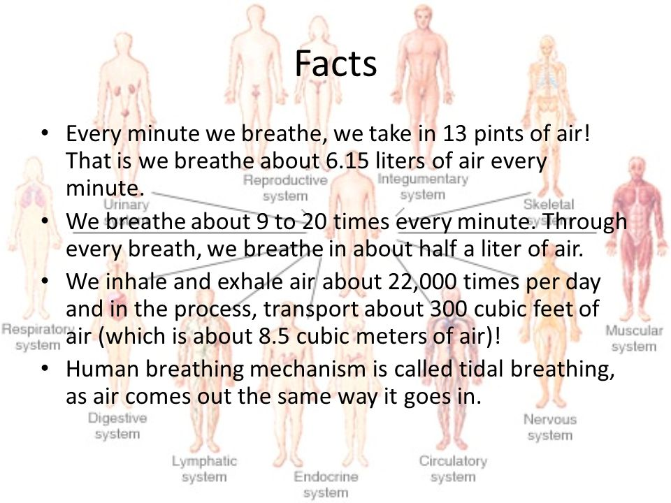 Facts Every minute we breathe, we take in 13 pints of air! That is we breathe about 6.15 liters of air every minute. We breathe about 9 to 20 times ev
