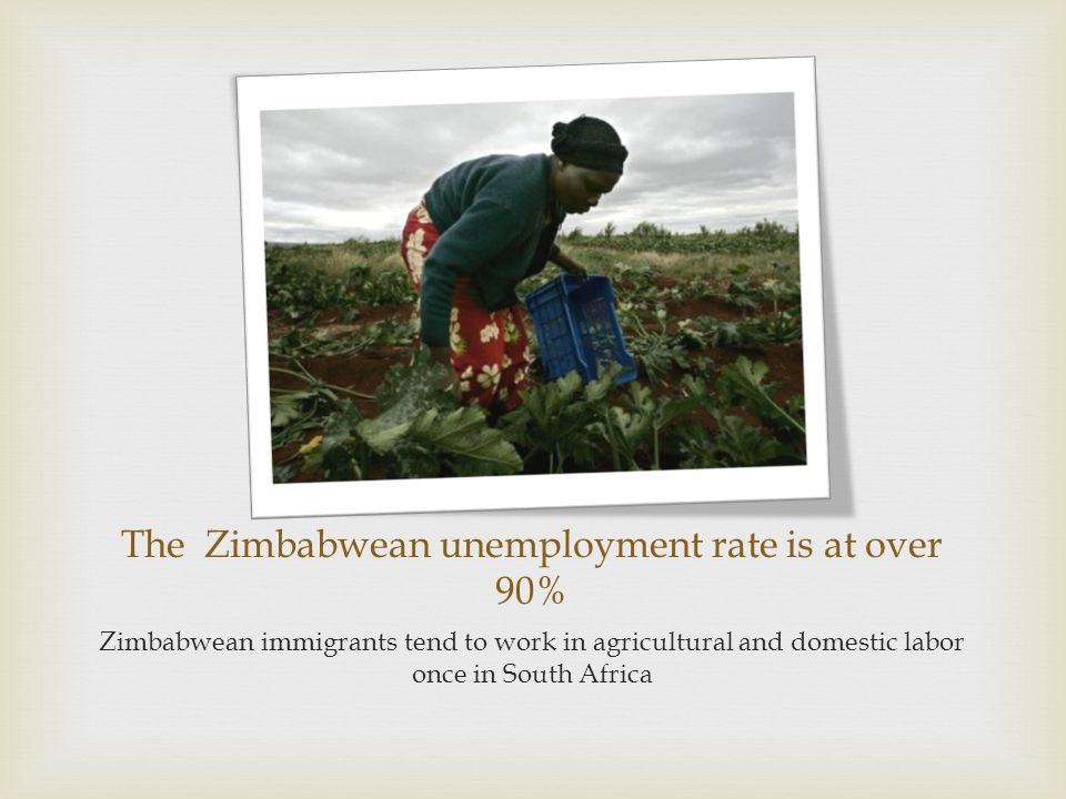 The Zimbabwean unemployment rate is at over 90% Zimbabwean immigrants tend to work in agricultural and domestic labor once in South Africa