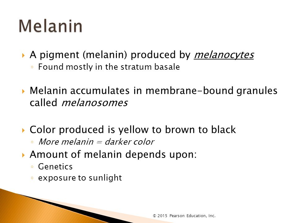  A pigment (melanin) produced by melanocytes ◦ Found mostly in the stratum basale  Melanin accumulates in membrane-bound granules called melanosomes  Color produced is yellow to brown to black ◦ More melanin = darker color  Amount of melanin depends upon: ◦ Genetics ◦ exposure to sunlight © 2015 Pearson Education, Inc.