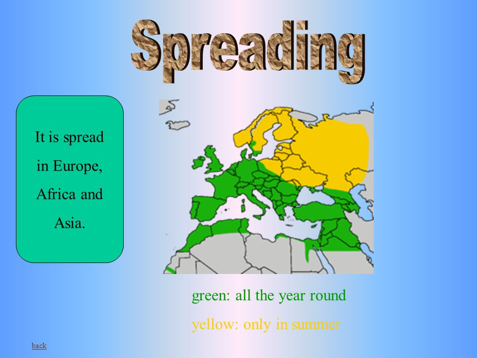 green: all the year round yellow: only in summer It is spread in Europe, Africa and Asia. back