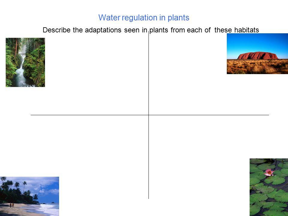 Water regulation in plants Describe the adaptations seen in plants from each of these habitats