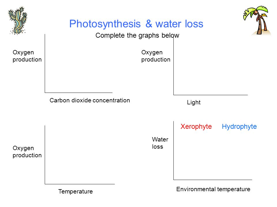 Photosynthesis & water loss Carbon dioxide concentration Temperature Oxygen production Light Environmental temperature Water loss Oxygen production Oxygen production Complete the graphs below XerophyteHydrophyte
