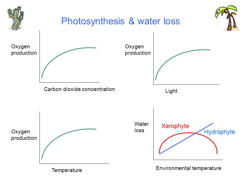 Photosynthesis & water loss Carbon dioxide concentration Temperature Oxygen production Light Environmental temperature Water loss Oxygen production Oxygen production Xerophyte Hydrophyte
