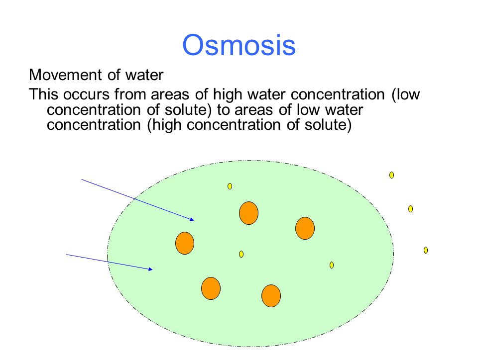 Osmosis Movement of water This occurs from areas of high water concentration (low concentration of solute) to areas of low water concentration (high concentration of solute)