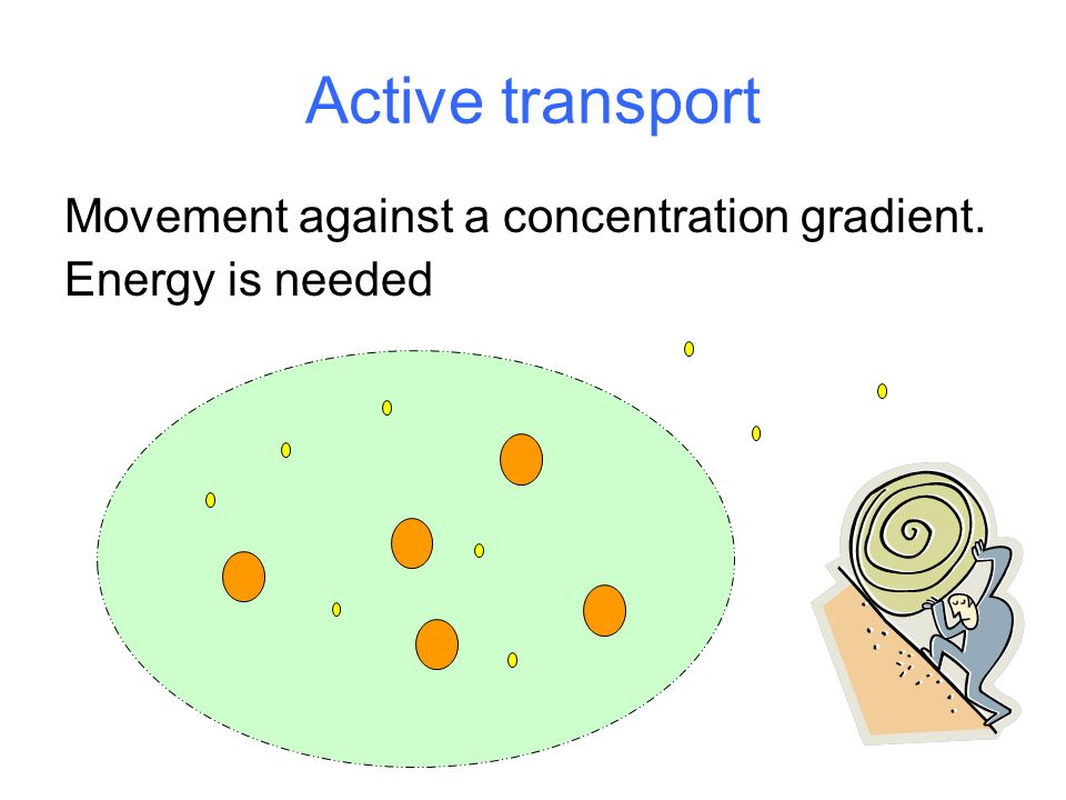 Active transport Movement against a concentration gradient. Energy is needed
