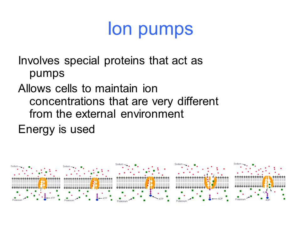 Ion pumps Involves special proteins that act as pumps Allows cells to maintain ion concentrations that are very different from the external environment Energy is used
