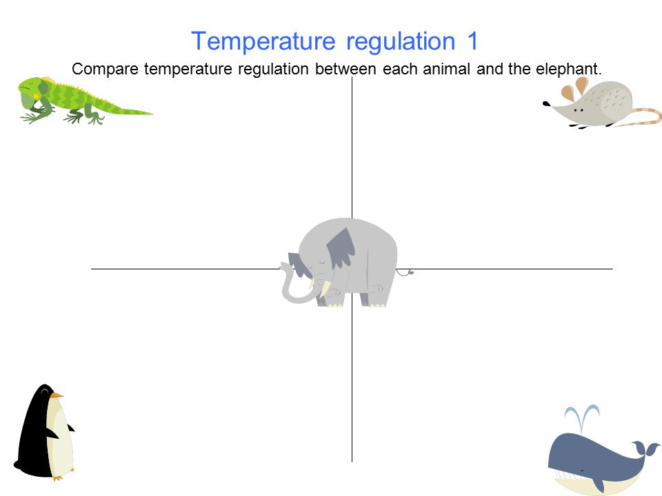 Temperature regulation 1 Compare temperature regulation between each animal and the elephant.