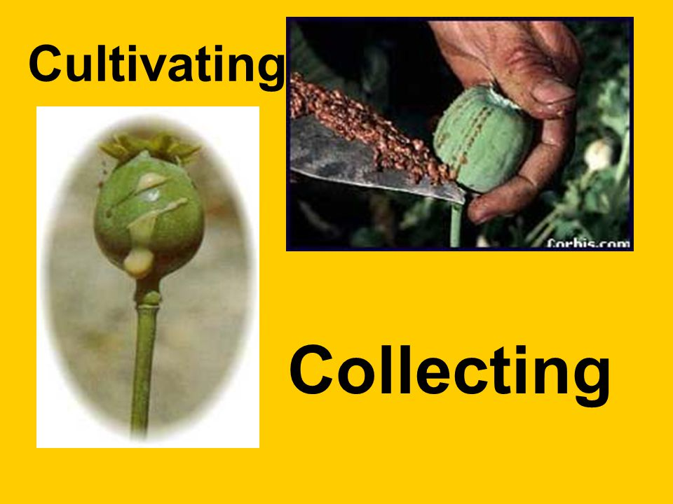 Cultivating Collecting