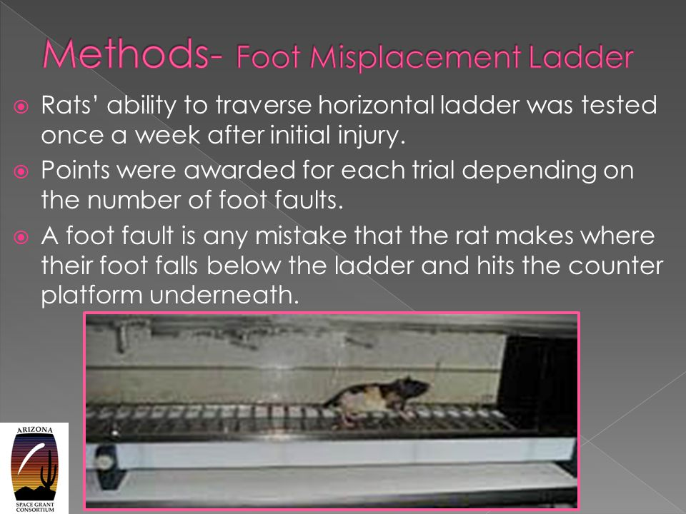  Rats' ability to traverse horizontal ladder was tested once a week after initial injury.
