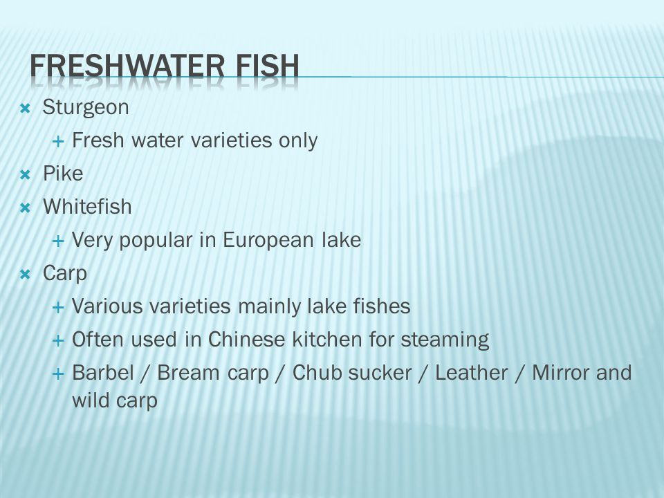  Sturgeon  Fresh water varieties only  Pike  Whitefish  Very popular in European lake  Carp  Various varieties mainly lake fishes  Often used in Chinese kitchen for steaming  Barbel / Bream carp / Chub sucker / Leather / Mirror and wild carp