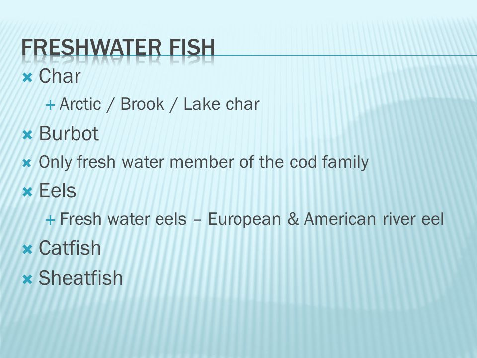  Char  Arctic / Brook / Lake char  Burbot  Only fresh water member of the cod family  Eels  Fresh water eels – European & American river eel  Catfish  Sheatfish