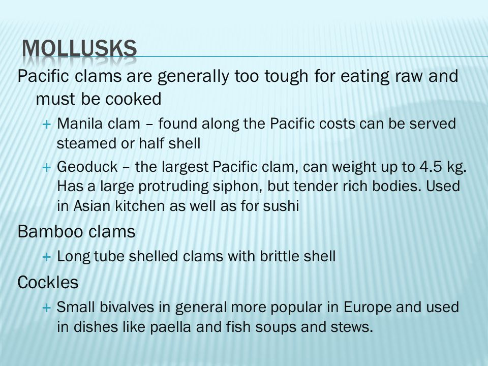 Pacific clams are generally too tough for eating raw and must be cooked  Manila clam – found along the Pacific costs can be served steamed or half shell  Geoduck – the largest Pacific clam, can weight up to 4.5 kg.
