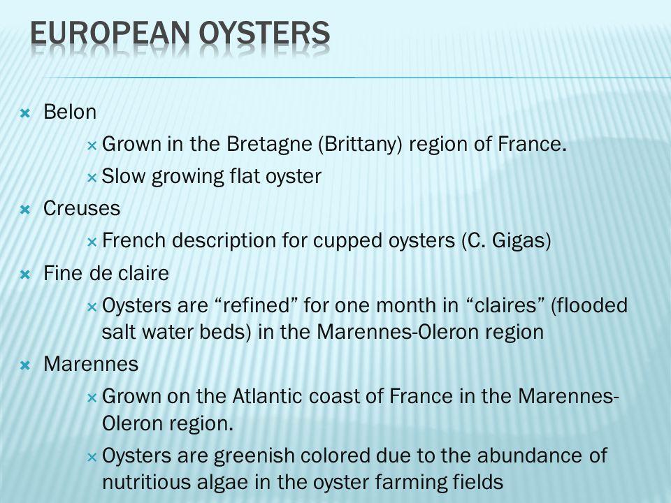  Belon  Grown in the Bretagne (Brittany) region of France.