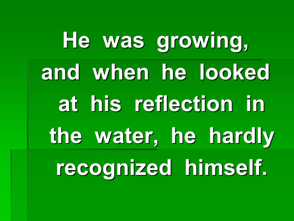 He was growing, and when he looked at his reflection in at his reflection in the water, he hardly the water, he hardly recognized himself.