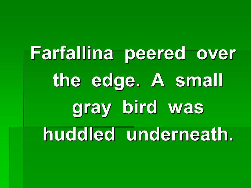 Farfallina peered over the edge.A small the edge.