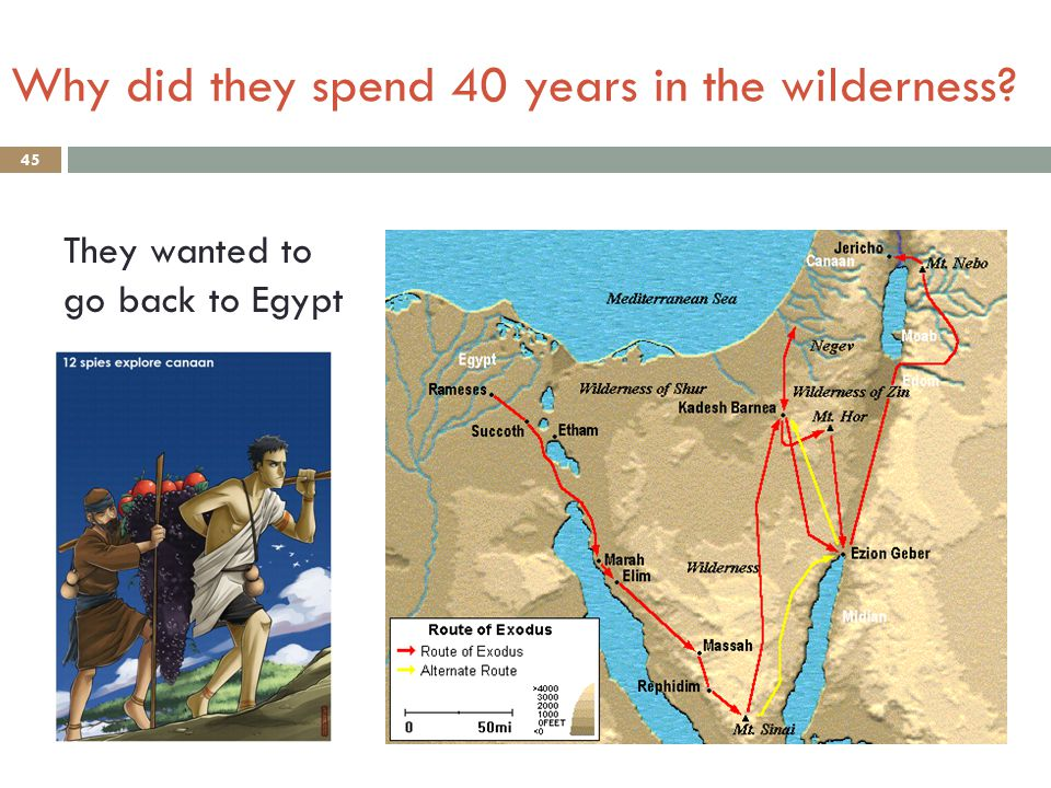 Why did they spend 40 years in the wilderness? 45 They wanted to go back to Egypt