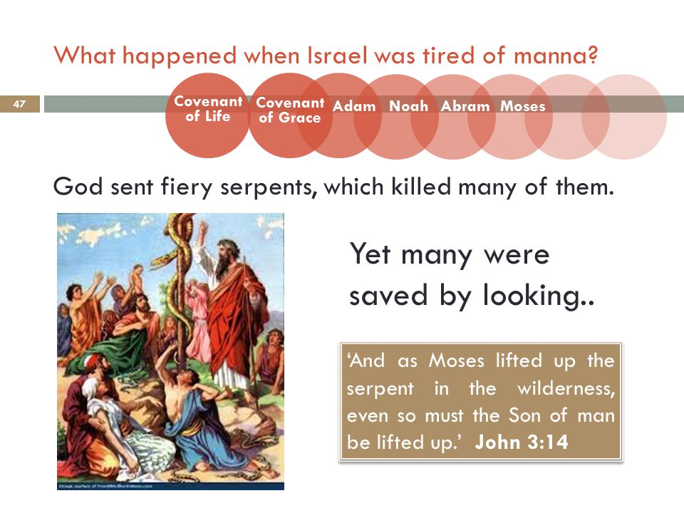 What happened when Israel was tired of manna? 47 God sent fiery serpents, which killed many of them. Covenant of Life Adam Covenant of Grace NoahAbram
